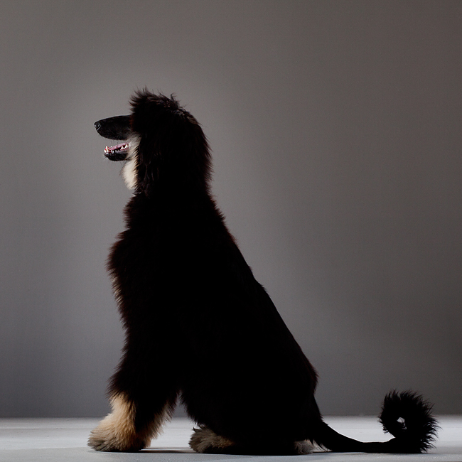 Ottawa-Pet-Photographers-03